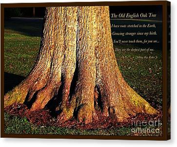 The Old English Oak Tree Canvas Print