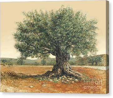 The  Old Olive Tree. By Miki Karni Canvas Print