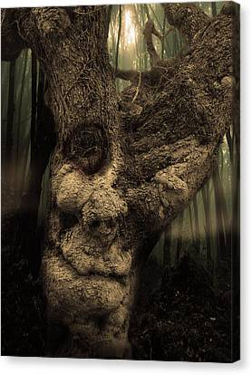 The Old Treant Canvas Print by Jeremy Martinson