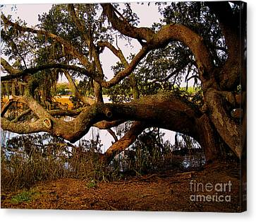 The Old Tree At The Ashley River In Charleston Canvas Print by Susanne Van Hulst