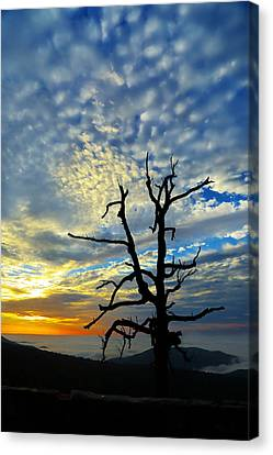 The Old Tree Canvas Print by Metro DC Photography
