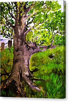 The Old Walnut Canvas Print