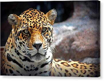 Canvas Print featuring the photograph The Ole Leopard Don't Change His Spots by Lynn Sprowl
