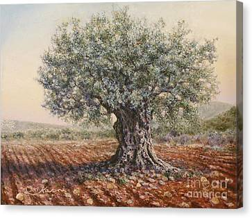 The Olive Tree In The Valley Canvas Print