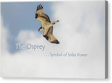 Canvas Print featuring the photograph The Osprey by DigiArt Diaries by Vicky B Fuller