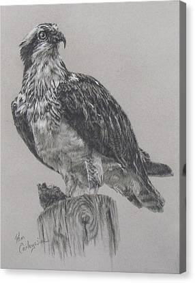Osprey Canvas Print - The Osprey by Pam Earleywine