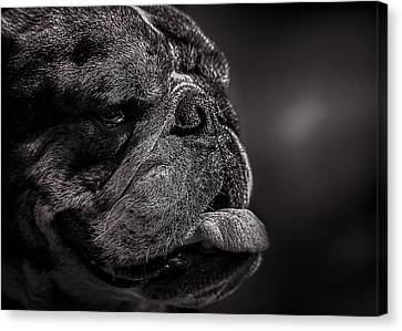 The Other Dog Next Door Canvas Print by Bob Orsillo
