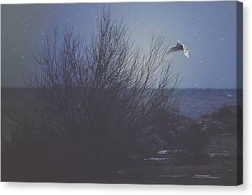 Snowy Night Night Canvas Print - The Owl by Carrie Ann Grippo-Pike