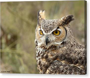 Canvas Print featuring the photograph The Owl by Lucinda Walter