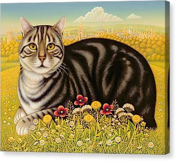 The Oxford Cat Canvas Print by Frances Broomfield