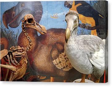The Oxford Dodo Canvas Print by Greg Smolonski/oxford University Images