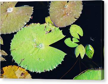 The Pacman Family At The Pond Canvas Print by Lynda Dawson-Youngclaus