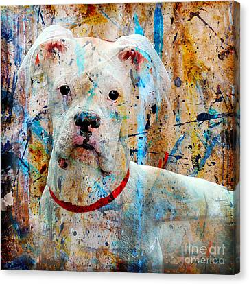 The Painter's Dog Canvas Print by Judy Wood