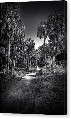 Oak Harbor Canvas Print - The Palm Trail B/w by Marvin Spates