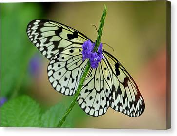 The Paper Kite Butterly Canvas Print