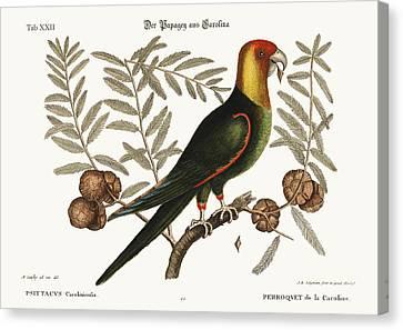The Parrot Of Carolina Canvas Print by Splendid Art Prints