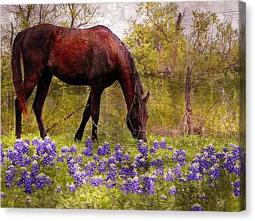 Canvas Print featuring the photograph The Pasture by Kathy Churchman