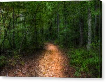 The Path Ahead Canvas Print