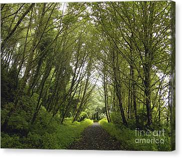 Canvas Print featuring the photograph The Path Ahead by Susan Parish