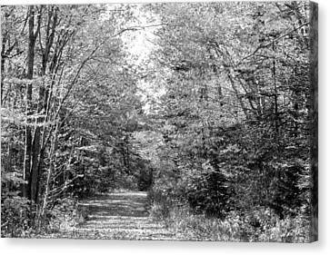 The Path Less Traveled Black And White Canvas Print by Brett Pelletier