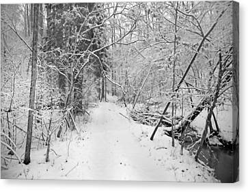 The Path Not Taken Canvas Print by Betsy Knapp