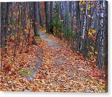 The Path On The Ridge Canvas Print