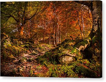 The Path Canvas Print by Stefano Termanini