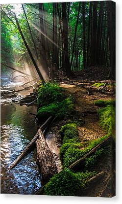 The Path That I Have Taken Canvas Print