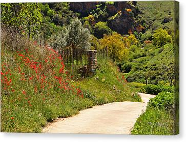 Path Through The Poppies Canvas Print - The Path Through The Valley by Mary Machare