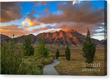 The Path To Beauty Canvas Print by Robert Bales