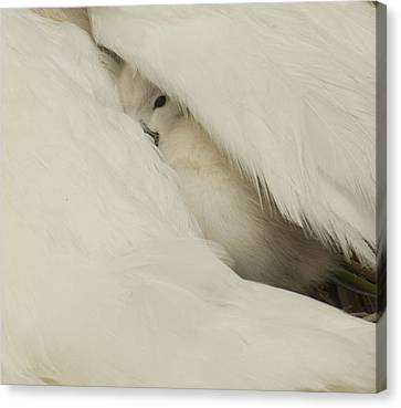 the Peak  Canvas Print by Terry Cosgrave