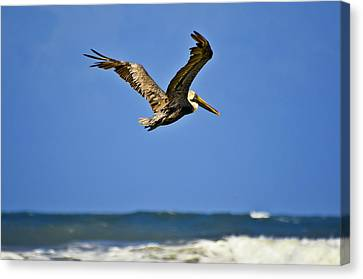 Canvas Print featuring the photograph The Pelican And The Sea by DigiArt Diaries by Vicky B Fuller