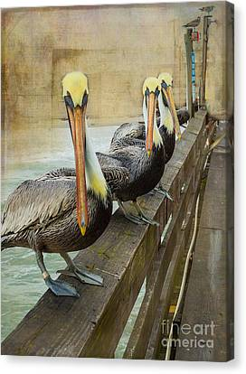The Pelican Gang Canvas Print