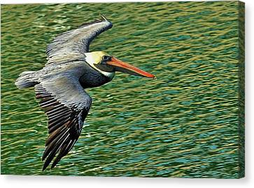 The Pelican Glide Canvas Print