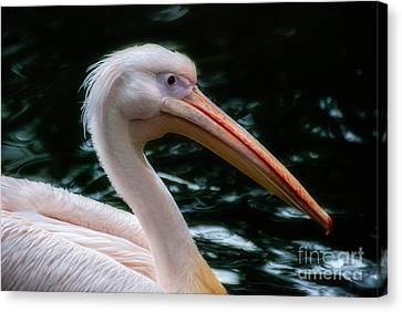 The Pelican Canvas Print by Hannes Cmarits