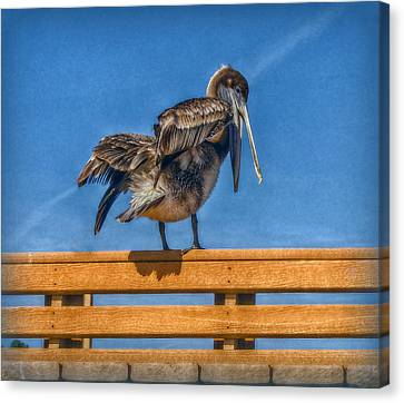 Canvas Print featuring the photograph The Pelican by Hanny Heim