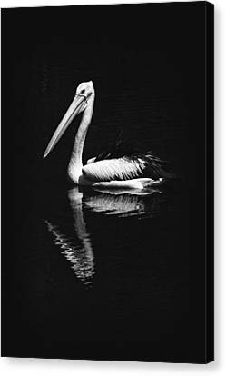 Canvas Print featuring the photograph The Pelican by Zoe Ferrie