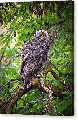 The Perch Canvas Print by Steve McKinzie