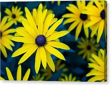 The Perennial Petal Canvas Print