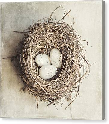 The Perfect Nest Canvas Print by Lisa Russo
