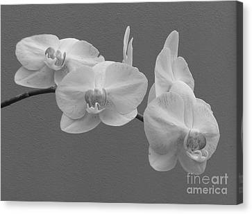 Tolan Canvas Print - The Perfect Orchid by To-Tam Gerwe