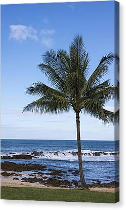 The Perfect Palm Tree - Sunset Beach Oahu Hawaii Canvas Print by Brian Harig