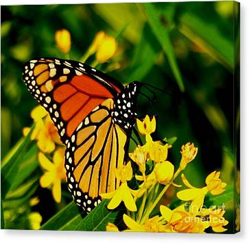 The Perfect Pose Canvas Print