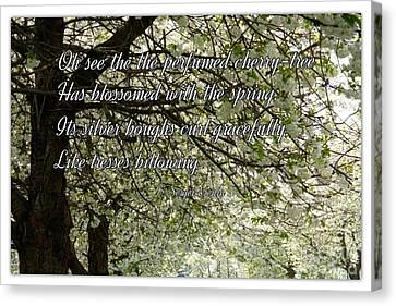 The Perfumed Cherry Tree 1 Canvas Print