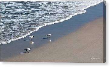 The Pied Sandpiper Canvas Print by Michelle Wiarda