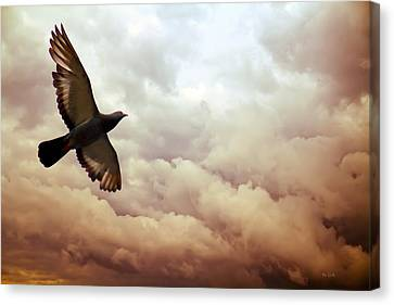 The Pigeon Canvas Print by Bob Orsillo
