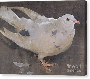 The Pigeon Canvas Print by Joseph Crawhall