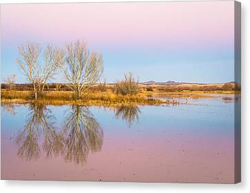 The Pink Sky Over The Golden Field - Bosque Del Apache, New Mexico Canvas Print by Ellie Teramoto
