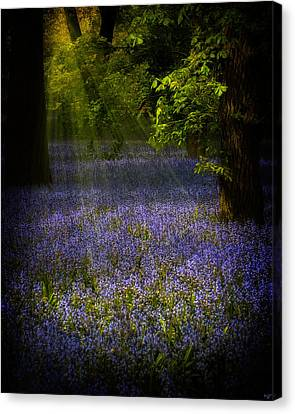 Canvas Print featuring the photograph The Pixie's Bluebell Patch by Chris Lord