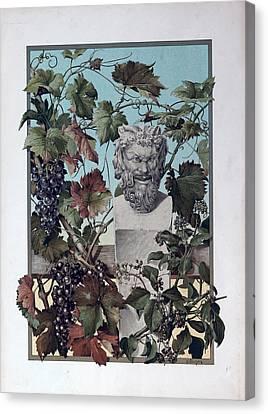 The Plant, Grapes, Bacchus, Wine, Mythology, Vine, Symbol Canvas Print by English School